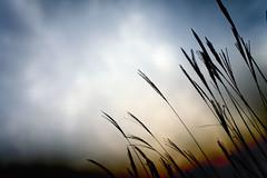 (slowhand7530) Tags: nikon d800e nikkor 50mm f12 ainikkor50mm12 autumn sky