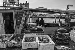..fishermen and fish (Lucky Lu62) Tags: portogaribaldi pescatori fishermen peschereccio pesce pescare barca persone vendita porto