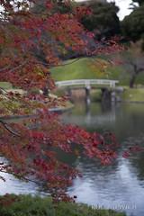 Tokyo Autumn (Rolandito.) Tags: asia nippon japan tokyo tokio autumn fall maple ahorn park koishikawa korakuen lake trees