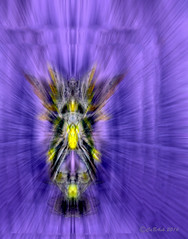 Fairy ride (CaBAsk! on and off. Thank U for the visit ) Tags: abstract art pattern bright serene expression olympus digital manipulation photoshop fun fairy light travel wings fantasy imagination purple joy dark ghost bike ride veil bug rider awardtree shockofthenew artdigital simplysuperb