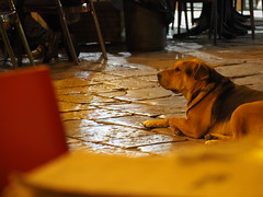 Palermo (Sicily) (ClaudioLicataPA) Tags: palermo sicily italy story yellow night dog