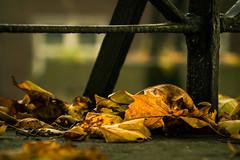 yellow & green (bjdewagenaar) Tags: autumn leafs colors grain mood dof closeup lines city urban buildings nature sony a58 alpha minolta 35105mm bokeh gorinchem gorcum holland dutch raw lightroom