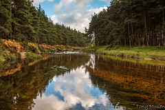 Wicklow Rivers (Tony Mullen Photography) Tags: thekingsriverwicklow kingsriverwicklow kingsriverblessington blessington blessingtonlakes blessingtonwicklow tonymullenphotography