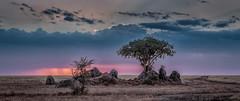 Kopje with Evening Sky and Virga (David Ramirez Photography) Tags: africa serengeti serengeticentral tanzania kopje virga sunset
