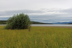 Teslin Lake (demeeschter) Tags: canada yukon territory highway landscape scenery lake mountains road forest nature teslin town