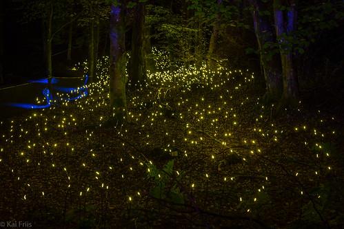 Meadow of lights