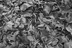 Erster Frost - 0001_Web (berni.radke) Tags: ersterfrost frost raureif wassertropfen rime eisblumen eiskristalle iceflowers icecrystals escarcha