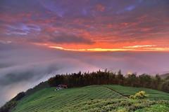 ~~ Tea field Sunset (Shang-fu Dai) Tags:  taiwan formosa   clouds seaofclouds nikon d800e sky  afs1635mmf4     landscape