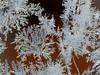 ice flowers (BrigitteE1) Tags: iceflowers eisblumen winterwonderland winterwunderland winter cold frost window outdoor bremen deutschland germany sunny pattern texture natur light frostflowers natureisagreatartist beautiful