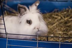Devo proprio uscire? (Russo 86) Tags: coniglio rabbit love