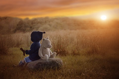 golden days before they end (Windermere Images) Tags: autumn faded glow sunset boy child pooh love cute wales fields mountains november light grass play imagine magic brilliant