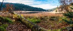VOSGES (chicos54) Tags: tourbièredemachais tourbière vosges nature paysage panorama landscape automne