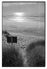 On the Beach (seagr112) Tags: unitedstates oregon oregoncoast coast beach dunes pacificcoasthighway pacificocean highway101 sonya900