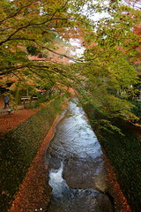 DSC02808 (MrSUIZOU) Tags: 京都 紅葉 北野天満宮 平野神社 十月桜