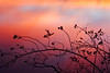 sherbert river (Austin Rapp) Tags: nature landscape bokeh color sunset long exposure landscapephotography red orange yellow new year sherbert water silhouette canon eos 7d 50mm