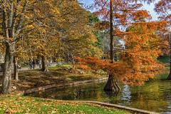 Colores del Otoo en Madrid (Merly_gon) Tags: otoo sun sunset spain anaranjados amarillos luz parqueelretiro colores atardeceres espaa madrid hojas verde agua reflejos animales sonya7 sony alpha7 parques park luces