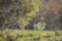 161025-1236-Sprinklers (Sterne Slaven) Tags: massachusetts plymouth marblehead capecod marthasvineyard edgartown oakbluffs vineyardhaven salem lynn turkeyvulture seawall tide waves seaweed historic october sailboats lighthouse hightide lowtide wildturkeys offseason canoe sunset fisherman seagulls gulls nakedwoman lensbaby katamabeach lucyvincentbeach gayhead chappaquiddick lagoon bramble whalingchurch seacreature cemetery plimothplantation roosters spiderwebs oldburialhill pilgrims clamdiggers sanddunes barnstable taunton sexynude sunhalo fullmoon sterneslaven water fountain 1600s wampanoag mayflower pelt harbor chathamma seals ocean atlanticocean coastal newengland actors