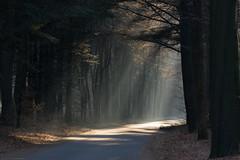 (CarolienCadoni..) Tags: sonyslta99 sal70200g2 70200mmf28gssmii rays sun raysoflight trees road sunbeams drouwen forest