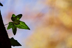 La Foglia (M.K.S. v i d e o • p h o t o g r a p h y) Tags: arezzo autunno autumn pratomagno lorociuffenna herbst herfst marksoetebierphotography mksvideophotography marksoetebier markchristiansoetebierphotography canon canoneos70d toscana tuscany toscane valdarno