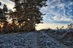 Frosty walk (dannicamra) Tags: nikon d5100 landscape winter tree nature frost path outdoor baum weg natur landschaft sky himmel