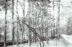 Beyond the Spectrum (Levelandpt) Tags: ir infraredfilm illfordsfx iso 200 nikon woods wood effect grain pond nature daylight summer grit soft