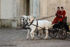 From the Royal Stables in Copenhagen                 Explored 5.12.2016 (K. Haagestad) Tags: horses kladruber coach copenhagen