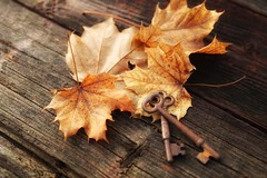Maple keys (s@ssyl@ssy) Tags: autumn fall leaves vintage old fallen keys rusty autumnal