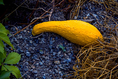 A whole lot (Ice Rain) Tags: life cliff colors grass leaves yellow composition crust carpet rocks hole earth bottom birth egg hard vessel boulders growth sediment saturation squash layer hay terrestrial mantle gravel ripening crevice puberty maturity constrast czvern