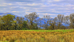 hidden gem (NoOneLikeMe78) Tags: trees mountains scotland scenery sony lochlomond duncrynehill marilynconnor