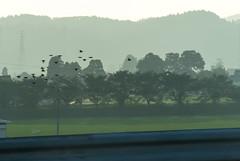DSC_5974.jpg (d3_plus) Tags: sunset sky cars field japan countryside twilight highway scenery  toyama      johana    nanto     nikon1  hokurikudo  dusktwilight  nikon1j3 1nikkorvr10100mmf456 hokurikuexpressway