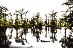 The Swamp. By J.Sanchez (jmsanchez94) Tags: sony neworleans lasvegasnevada