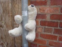 Pole dancing bear in Preston (Tony Worrall) Tags: road street urban silly abandoned wall fun lost funny dancing teddy northwest grim pole teddybear preston northern poledance 2014tonyworrall