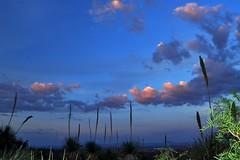 Surrounding Sotol (jaimeloyapics) Tags: sunset summer mountain rain weather clouds landscape franklin evening texas desert dusk spoon trail elpaso sotol dasylirion wheeleri