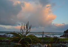 Sunrise Blouberg (louisemcduling) Tags: sea seascape nature clouds sunrise southafrica see aloe natuur wolke bloubergstrand suidafrika sonsopkoms aalwyn nikonnikond7100 seelandskap