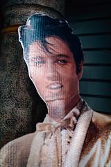 Elvis, Graceland (Adam Billyeald) Tags: portrait usa color museum memphis interior fake elvis roadtrip plastic cardboard graceland commercialism sonyrx1