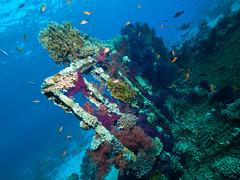 Remains of The Yolanda (altsaint) Tags: underwater redsea panasonic shipwreck yolanda gf1 blueseas