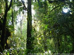 Harenna Forest (ebuechley) Tags: ethiopia oromia