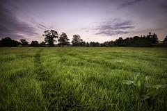 Meadow (explored) (Mandlenkhosi) Tags: trees field landscape scotland tracks gloaming drymen nikond800 nikonafsnikkor1635mm14gedvr
