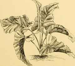 Anglų lietuvių žodynas. Žodis southern spatterdock reiškia pietų spatterdock lietuviškai.