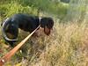2014-07-29-1182 (verbeek_dennis) Tags: dachshund tax kaapo dashond mäyräkoira такса gravhund jazvečík táksa