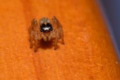 Other alien (I)... (ndrg) Tags: mountain blur macro bug spider nikon bokeh alien desenfoque micro araña montaña tamron 90mm vc usd sote 90mm28 ndrg d5100 ndrg2