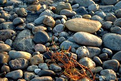 Piedras Playa Amarilla (Jose Vallejo 67) Tags: sea naturaleza sun sol beach nature landscape mar nice nikon mediterraneo stones awesome bonito playa paisaje murcia piedras aguilas d90