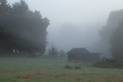 they're still sleeping (erix!) Tags: morning mist fog weide nebel schuppen meadow wiese stall hut shack ef morgennebel