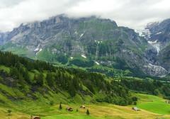 20140809-DB-3498 (DeNDeMaN) Tags: flowers mountains alps switzerland first august hike glacier grindelwald mountainlake swissalps iphone berneseoberland swissmountains 2014 bort wilderswil schynigeplatte faulhorn iphonephotography iphoneography