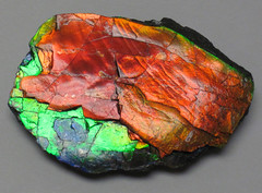 Ammolite from Placenticeras fossil ammonite (Bearpaw Formation, Upper Cretaceous, 70-75 Ma; mine in St. Mary River Valley, southern Alberta, southwestern Canada) 2 (James St. John) Tags: canada fossil formation alberta ammonite bearpaw cretaceous ammolite placenticeras
