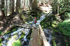 More logs to cross (daveynin) Tags: bridge river log crossing nps olympic marlena deaftalent deafoutsidetalent deafoutdoortalent
