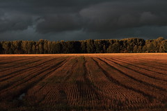 Before the storm (Glassholic) Tags: light summer cloud storm field landscape countryside cloudy wheat 500v50f