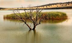 IMG_2200 Dam - Embalse de la Cabezuela NO 5 - Seen On Explore - 2014-09-19 # 24 (jaro-es) Tags: espaa nature canon spain dam natur natura spanien embalse naturesfinest staudamm spanelsko naturewatcher eos70d naturemaster