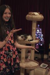 (chimidoro) Tags: christmas xmas uk home me december purple sweet romeo athome xmastree dorian  fibreoptic cutiepies velvetcurtain 2013 chimidoro bluelipstick  roxannekirigoe newscratchpost   roxannekirigoe shikijitsu