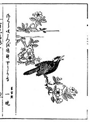 Cherry and common hill myna (Japanese Flower and Bird Art) Tags: flower bird art japan cherry japanese book hill picture common kano woodblock prunus religiosa myna rosaceae sturnidae gracula readercollection morinori sekichushi tsunenobu tanyu